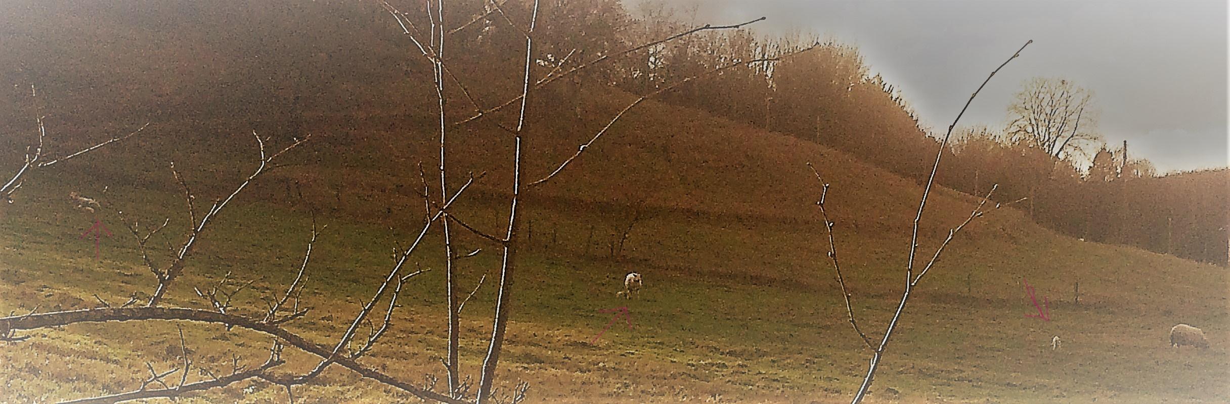 Maintenant, il y a 3 agneaux!